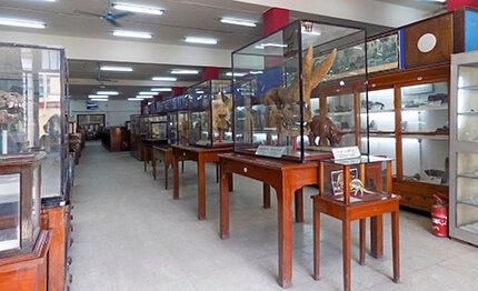 Pyramid Explorer 2016, Ancient World Tours, Geology Museum