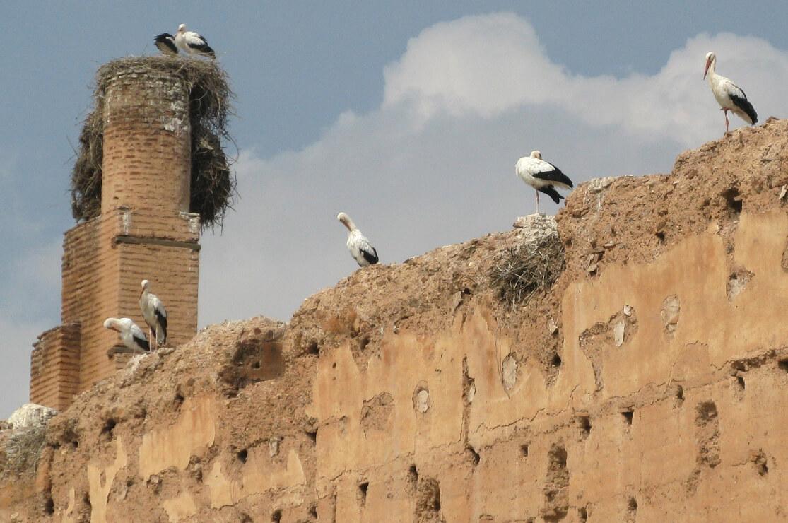 Storks, el Badi Palace